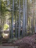 厚木市の写真
