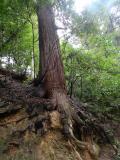 奈良市の写真