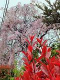 川口市の写真
