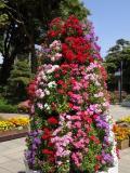 藤沢市の写真