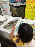 佐賀県の写真
