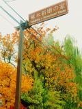 盛岡市の写真