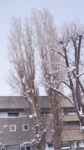 旭川市の写真