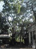 三軒茶屋の写真
