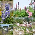 いろんな種類のお花もいっぱい咲いてます