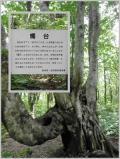 秋田県の写真