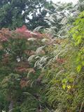 高尾山の写真