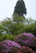 箱根の写真