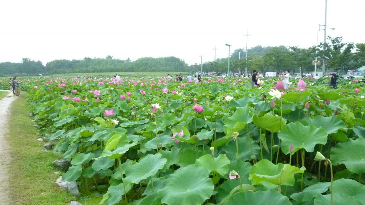 慶州瞻星台の画像 p1_10
