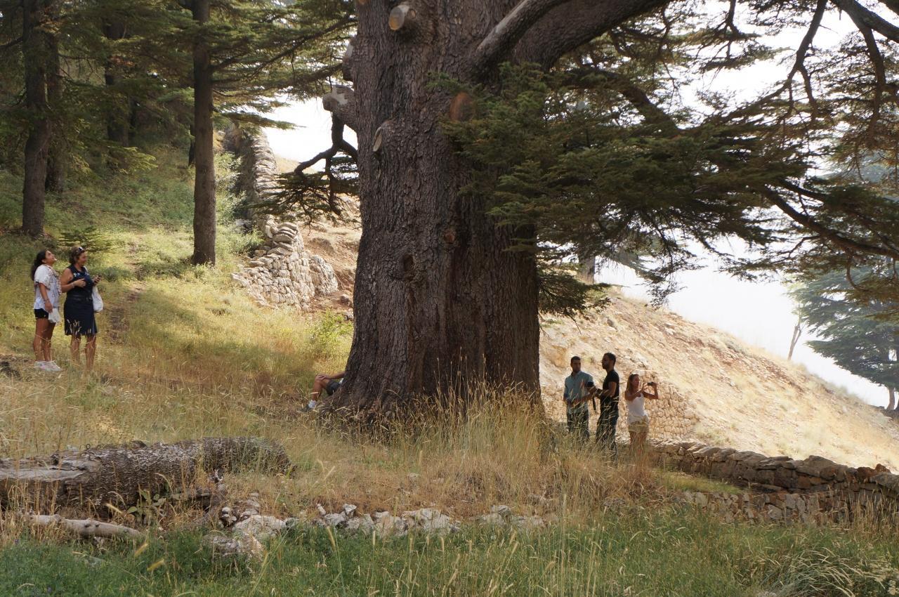 レバノン杉は、非常に成長の遅い樹でこれほど程の大... レバノン一週8日間(2日目~カディーシャ