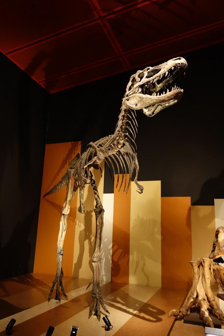 ヒプセロサウルス