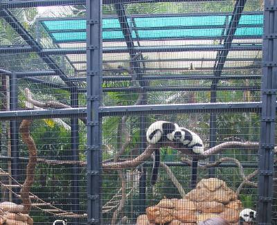 香港動植物公園(ホンコンドウショクブツコウエン)