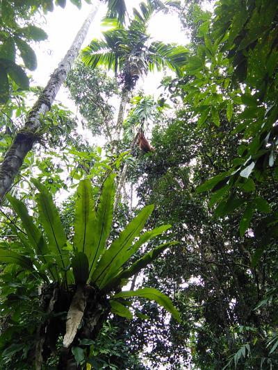 スマトラの熱帯雨林遺産