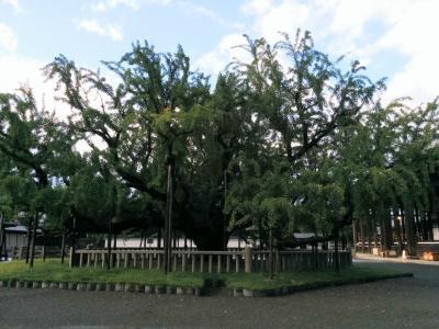 西本願寺(お西さん)