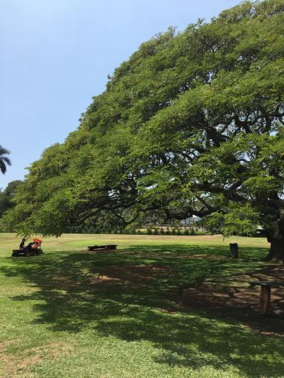 モアナルア・ガーデン