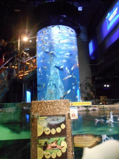 KLCC水族館