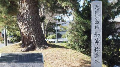 五街道のなかで現存する数少ない松並木のひとつ