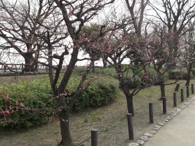 大阪城 梅林