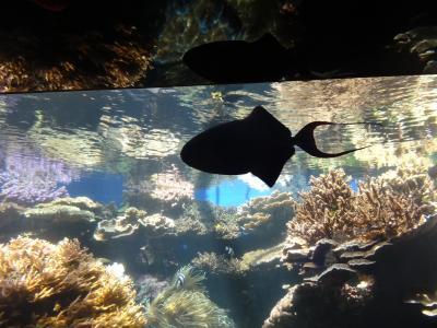 こじんまりとした水族館