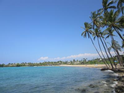 海亀に会えたビーチ