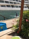 イルカが楽しめるホテル