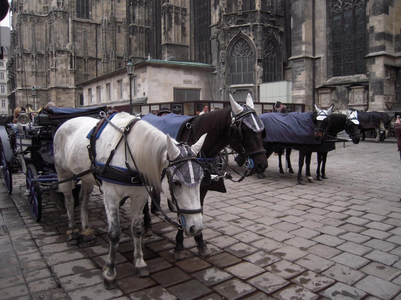 ウィーン歴史地区の画像 p1_38