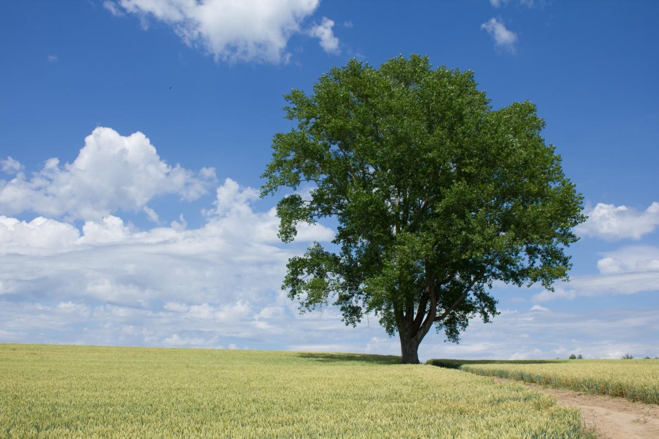 ポツンと立つ樹木画像