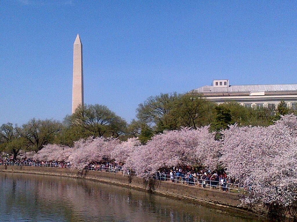 ワシントンDC桜祭りNational Cherry Blossom Festival