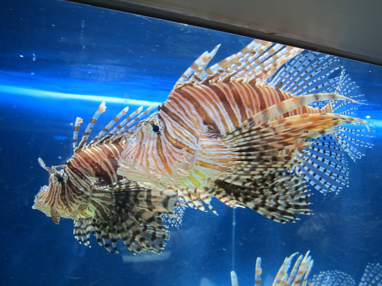 すすきの・札幌の観光スポット サンピアザ水族館