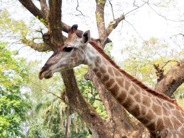 サイゴン 動植物園写真・画像