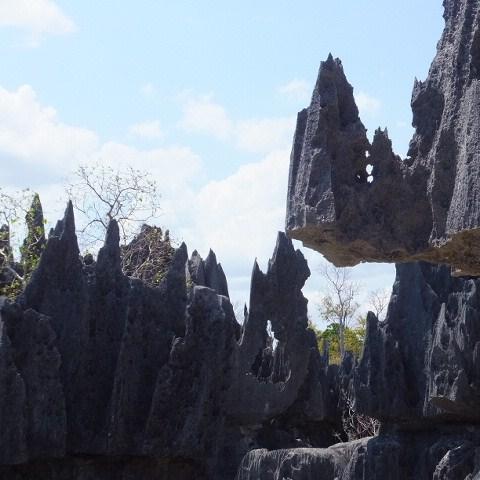 ツィンギ・デ・ベマラ厳正自然保護区の画像 p1_20