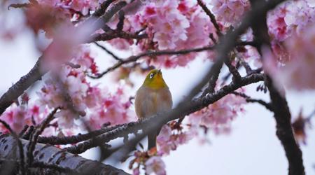 「あたみ桜」を見に、ふら〜っと熱海へ!...