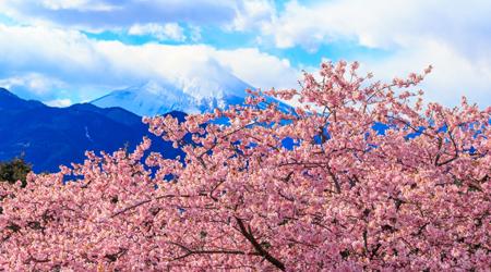 春はすぐそこまで!?〜まつだ桜まつり(西平畑公園)・菜花ま...