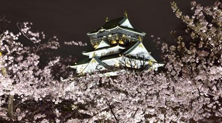 赤色の国鉄型車両103系を追いかけて、満開な桜が咲き広がる...
