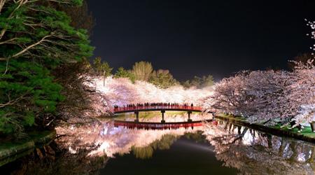 凄い!!凄すぎる弘前城の夜桜ライトアップ  「さくら前線北...