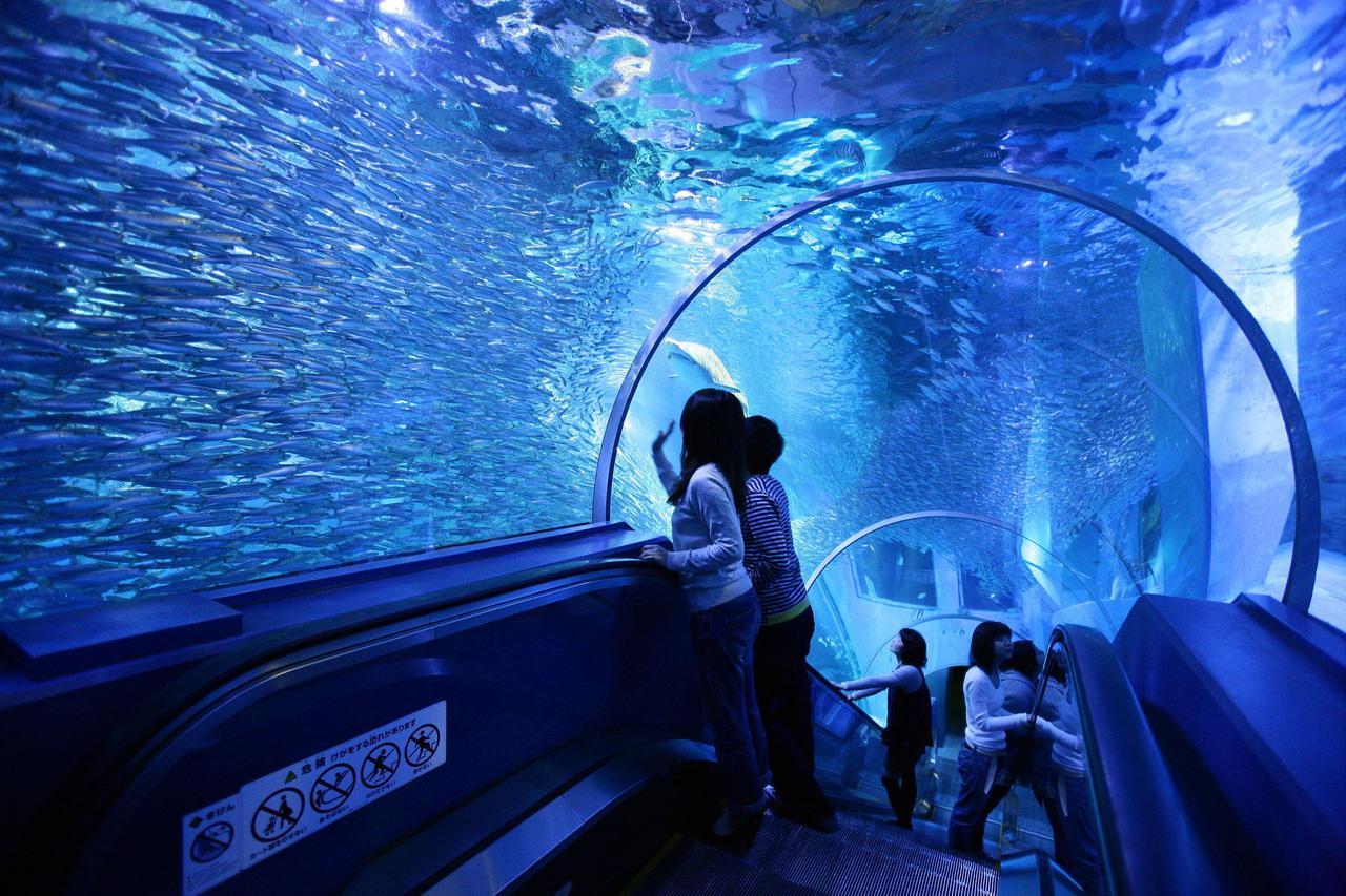 【八景島シーパラダイス】4つの水族館で1日遊べる♪特別料金! 写真