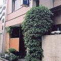 写真:長良川旅館