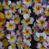 リリホテル&新ハワイ料理 カパルア 写真