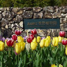 植物学者・牧野富太郎の業績をたたえて1958年に開園した植物園