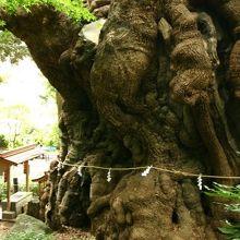 大楠と巨岩が見所の温泉街熱海の神社