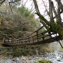 二つのかずら橋と野猿もあって、楽しかったですよ〜!