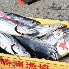 新鮮な魚介類が豊富です!勝浦の朝市