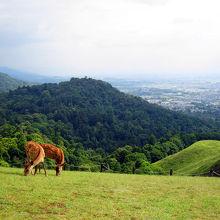奈良市内を一望できる。