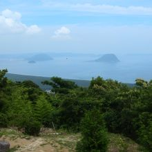 きれいな海岸沿いの松林です