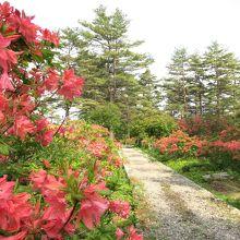 秋は紅葉、春はツツジが美しい公園