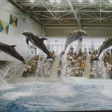 水族館でイルカを見よう    ※鹿児島県鹿児島市