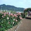 さかき千曲川バラ公園