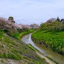 豊田川 (千葉県)