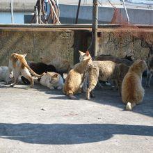 漁港付近に集まる猫。