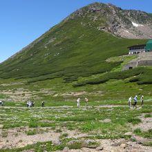 お花畑広がる高山の風景